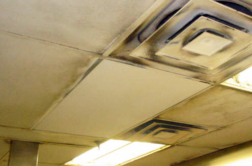 Clean And Green And Environmental Friendly Ceiling Pro